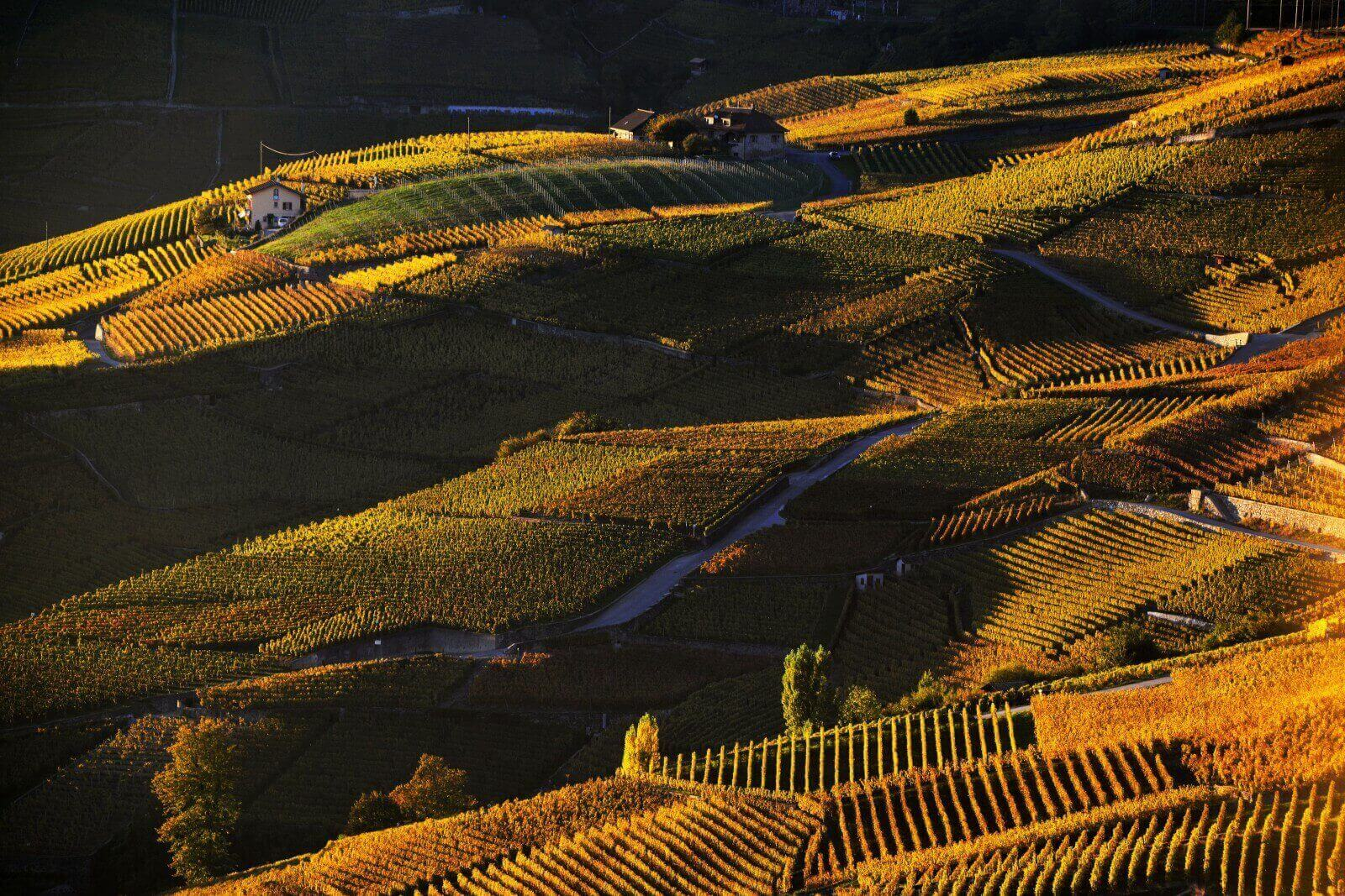 Vins de Lavaux